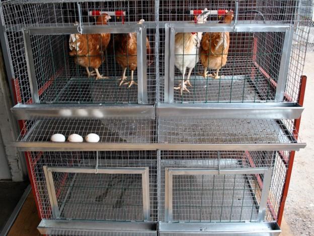 Клетки кур в домашних условиях