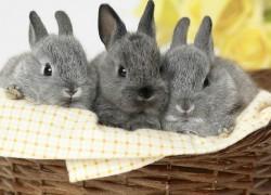 Как построить бизнес на разведении кроликов?