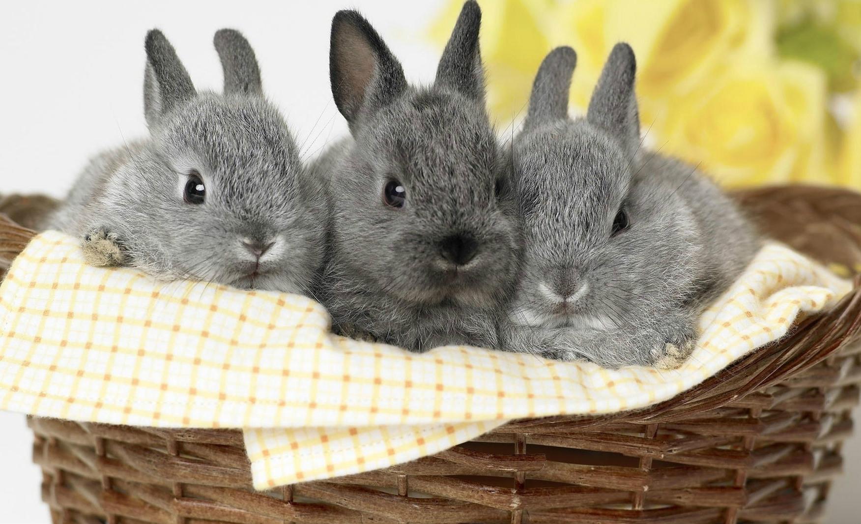 Книги по разведению кроликов скачать