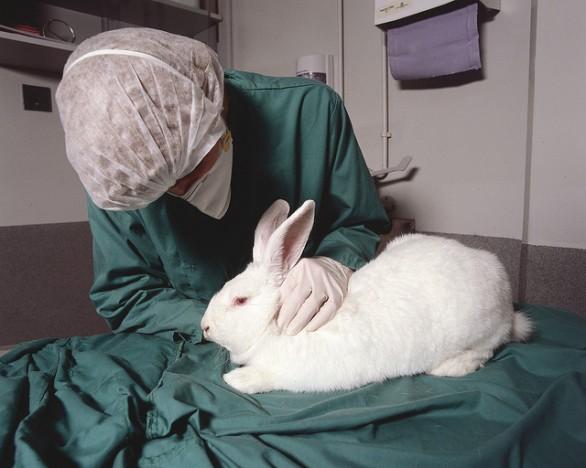 Проверка ветеринара