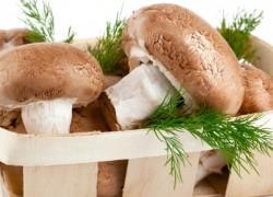 Выращивание грибов - прибыльный домашний бизнес!