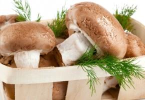 Выращивание грибов — прибыльный домашний бизнес!