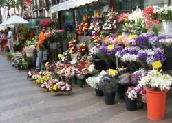 Бизнес-план магазина цветов