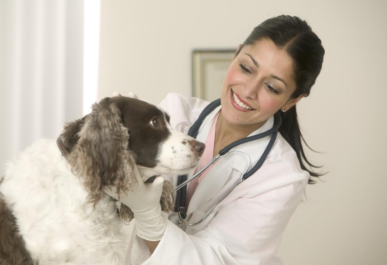 Женщина ветеринар