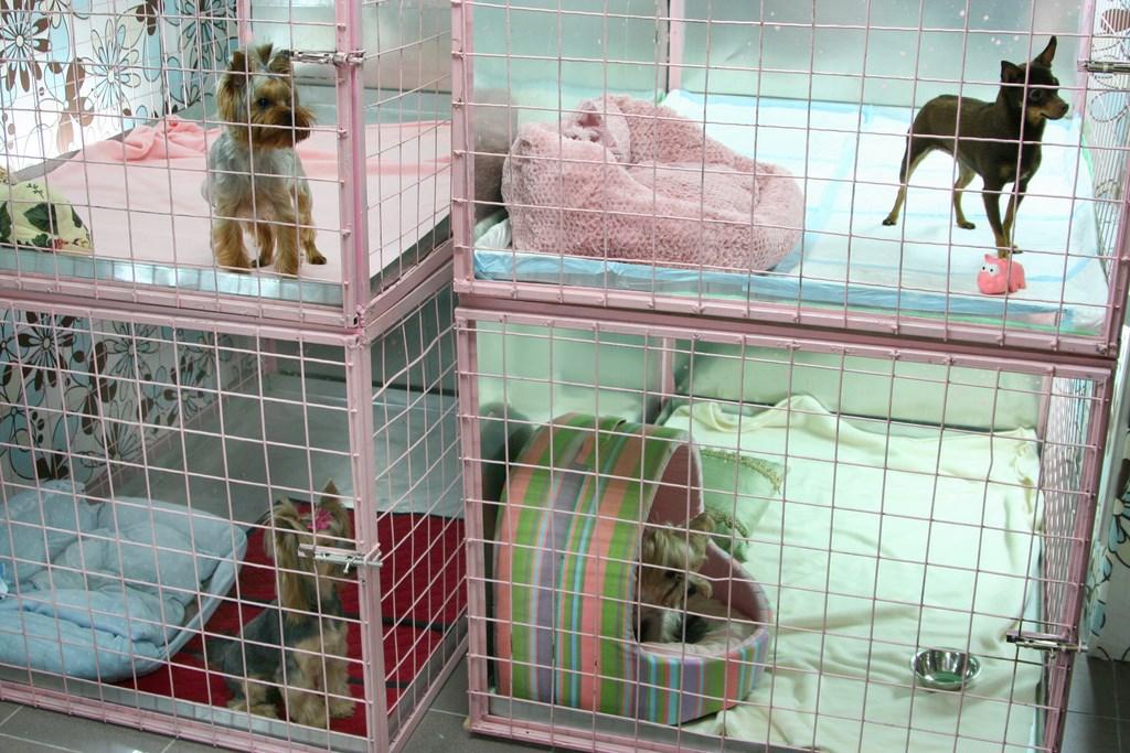 Изображение - Гостиницы для животных gostinica-dlya-zhivotnih-1