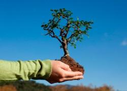 Как заработать на выращивании и продаже саженцев?