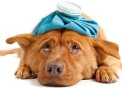 Что нужно для открытия ветеринарной клиники?