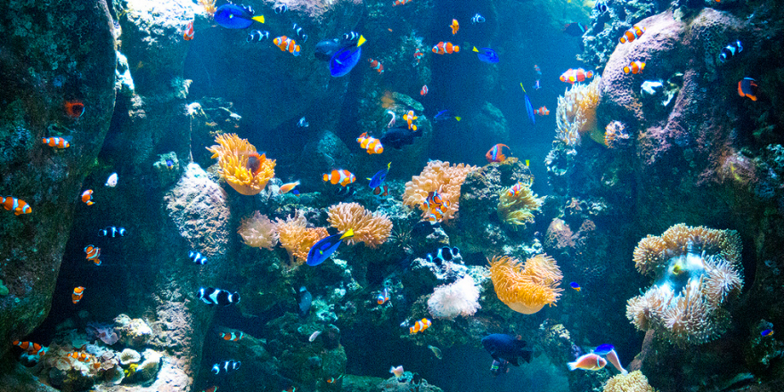 Разведение аквариумных рыбок на продажу