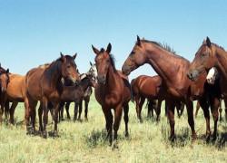 Ферма по разведению лошадей - престижно, круто, прибыльно!