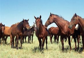 Ферма по разведению лошадей — престижно, круто, прибыльно!