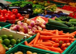Овощехранилище как бизнес: что нужно знать, открывая свое дело