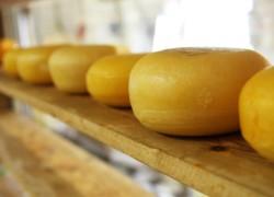 Мини-сыроварня: с чего начать и как выйти на прибыль от 100 000 р.