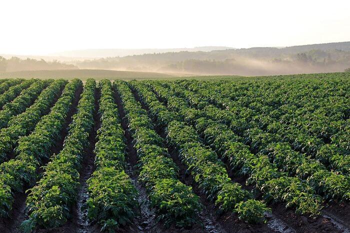 Как открыть прибыльный бизнес по продаже картофеля?