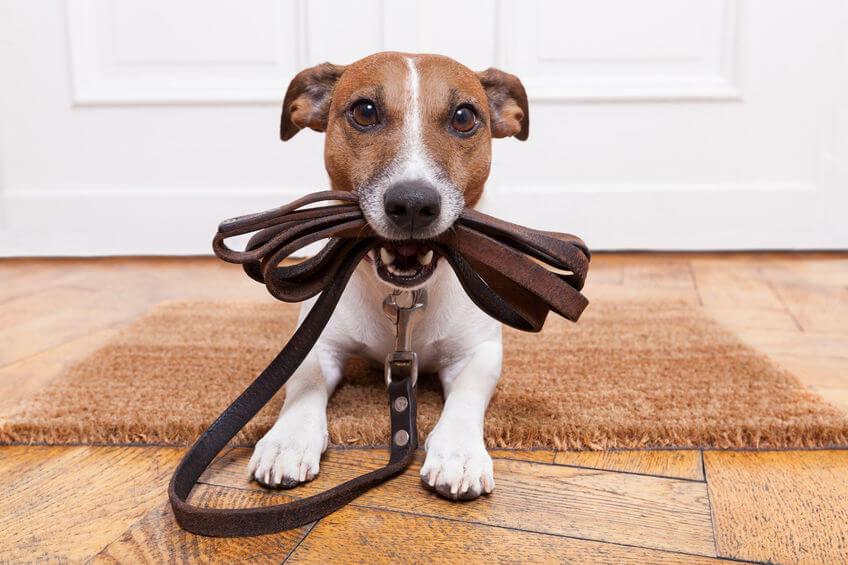 Как можно заработать на выгуле собак