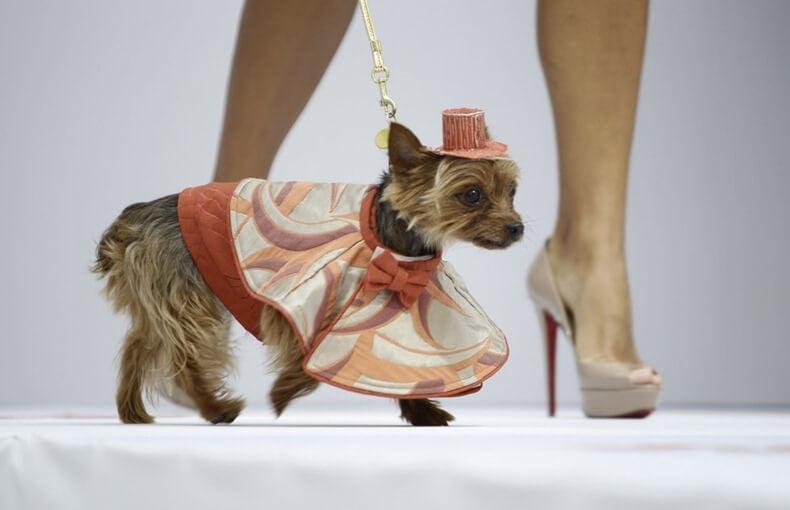Развитие бизнес-идеи по выгулу собак