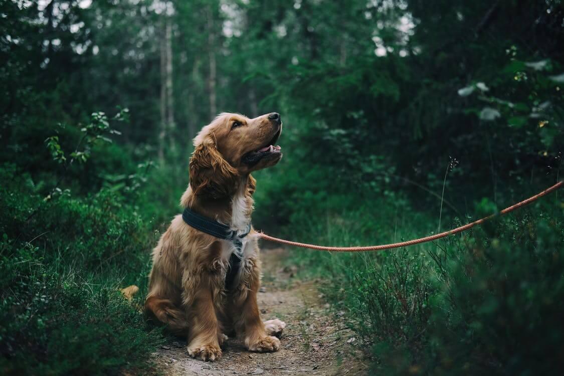Сколько стоит выгул собак и сколько можно заработать