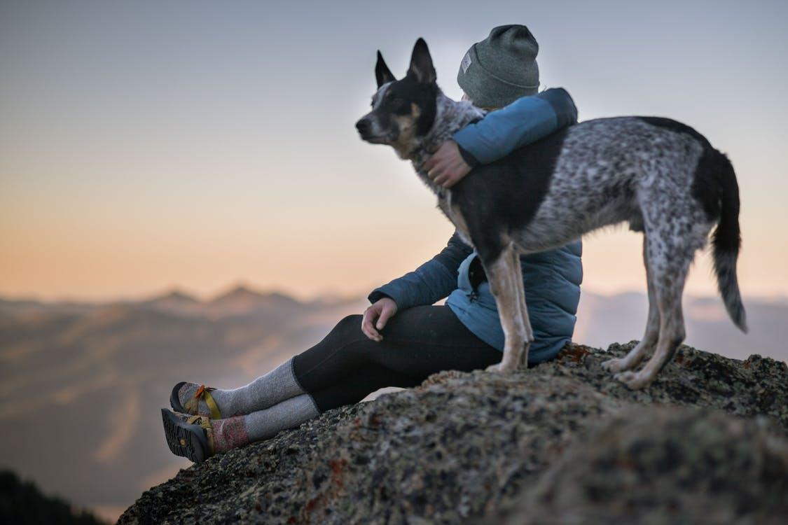 Услуги по выгулу собак