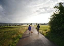 Бизнес на выгуле собак - как совместить приятное с полезным