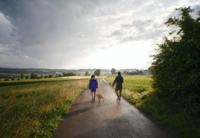 Бизнес на выгуле собак — как совместить приятное с полезным