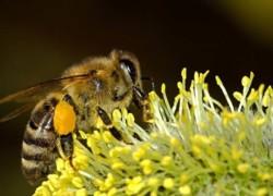 Пчеловодство - 3 формата ведения бизнеса и пошаговый план запуска