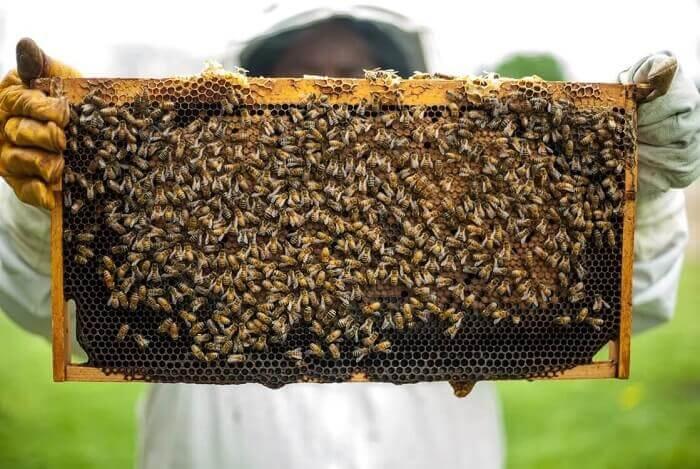 Актуальность и перспективы разведения пчел