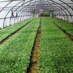 Бизнес план фермерского хозяйства