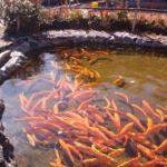 Бизнес план рыбного хозяйства